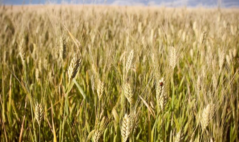 Certificación de Cultivos Combinables en el Alcance  GLOBALGAP