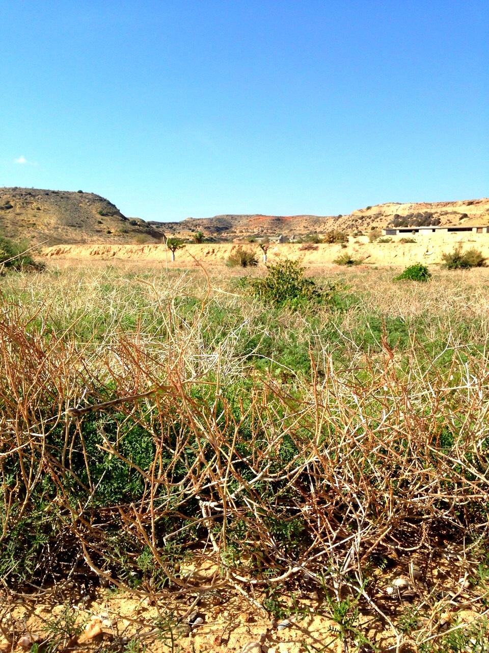 Nueva Instrucción Técnica Sobre Modificaciones del Periodo de Conversión en Producción Ecológica en Andalucía