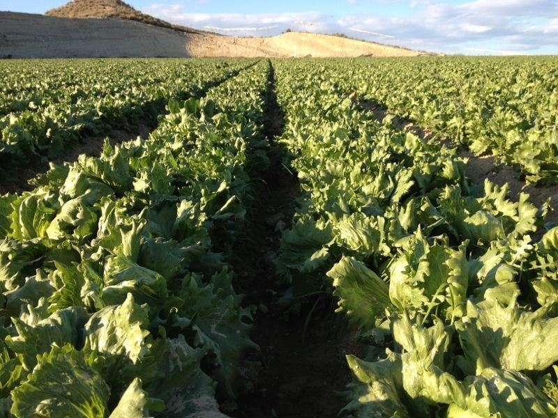 Análisis del Sector Hortícola Ecológico Almeriense