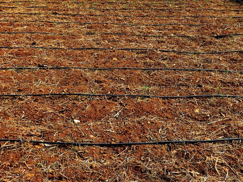Entrada en vigor de la orden que modifica el RD 506/2013 sobre fertilizantes