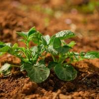 Publicado el Reglamento que recoge las nuevas normas sobre Producción Ecológica