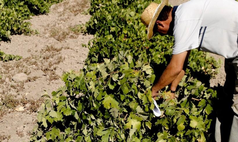 Condiciones para la verificación de los compromisos agroambientales por las Entidades de Certificación – Medida 10: Agroambiente y Clima. PDR 2014-2020