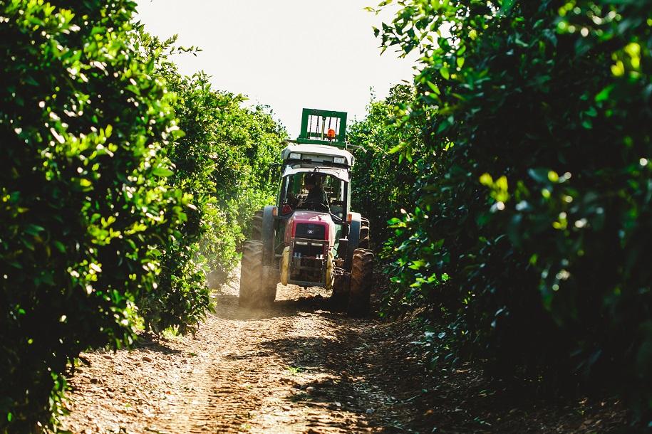 Publicada la Orden de Ayudas en Agricultura Ecológica para Castilla – La Mancha 2014 – 2020