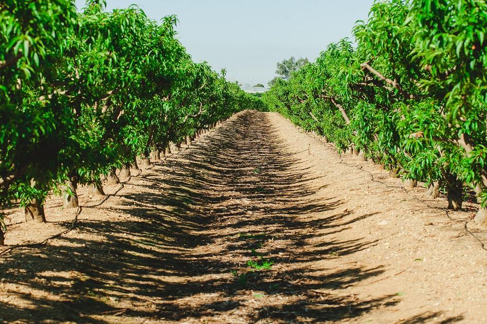 Registros de Producción Integrada de Andalucía: PRIN WEB
