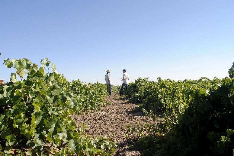 Plataforma para la Defensa de la Agricultura Ecológica en Castilla la Mancha
