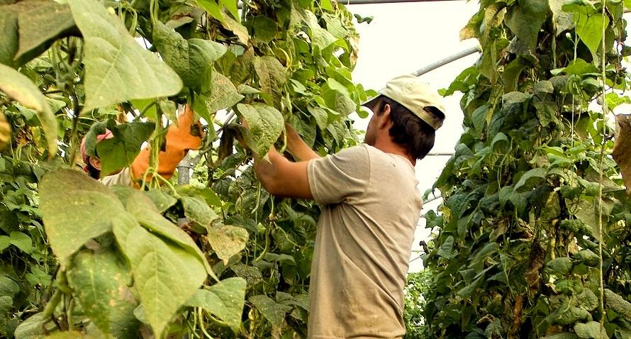 La Propuesta de Normativa sobre Agricultura Ecológica en manos de la Presidencia Maltesa para llegar a un Acuerdo