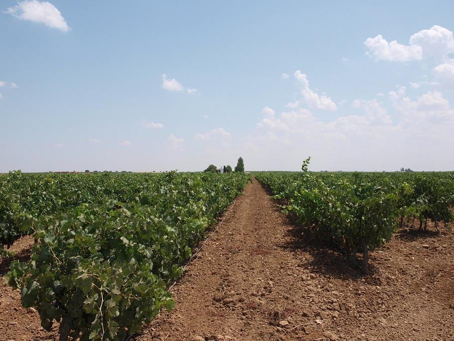 Castilla y León aprueba su Plan Estratégico de Producción Ecológica 2016-2020, que primará a jóvenes y mujeres.