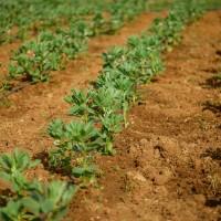 Los Productos Basados en Microorganismos se Incluyen en el Real Decreto de Fertilizantes