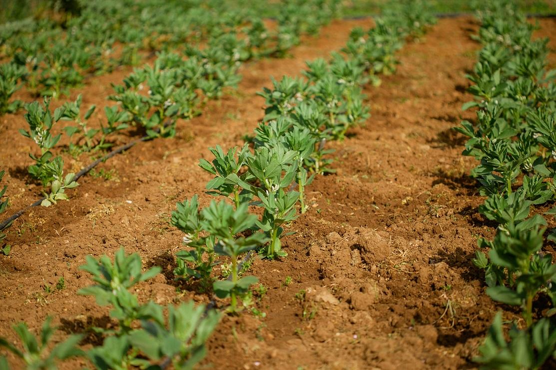 El sistema de producción en Agricultura Ecológica favorecerá la incorporación a los Jóvenes Agricultores de Castilla La Mancha.