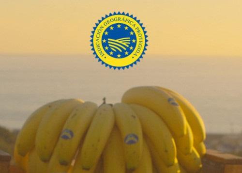Nueva Autorización para la Certificación IGP Plátano de Canarias