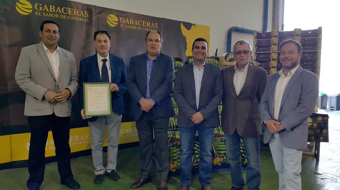 SAT Europlátano, primera OPP que obtiene la Certificación de la IGP Plátano de Canarias