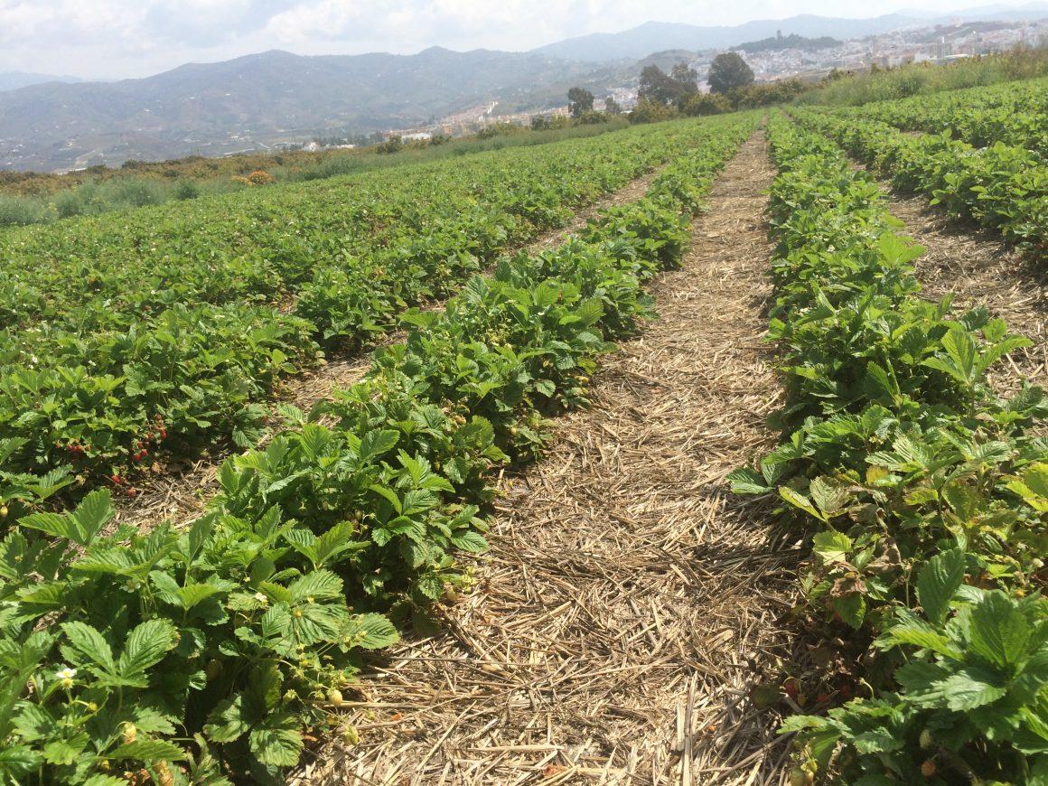 Propuesta de España a la Comunidad Europea para anticipar hasta el 70% de las ayudas de la PAC por la sequía