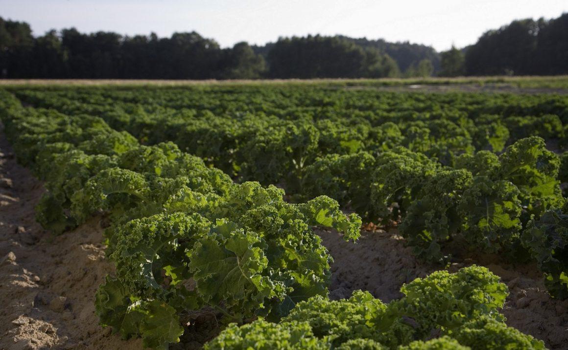 NUEVA PROPUESTA DE AGRICULTURA ECOLÓGICA