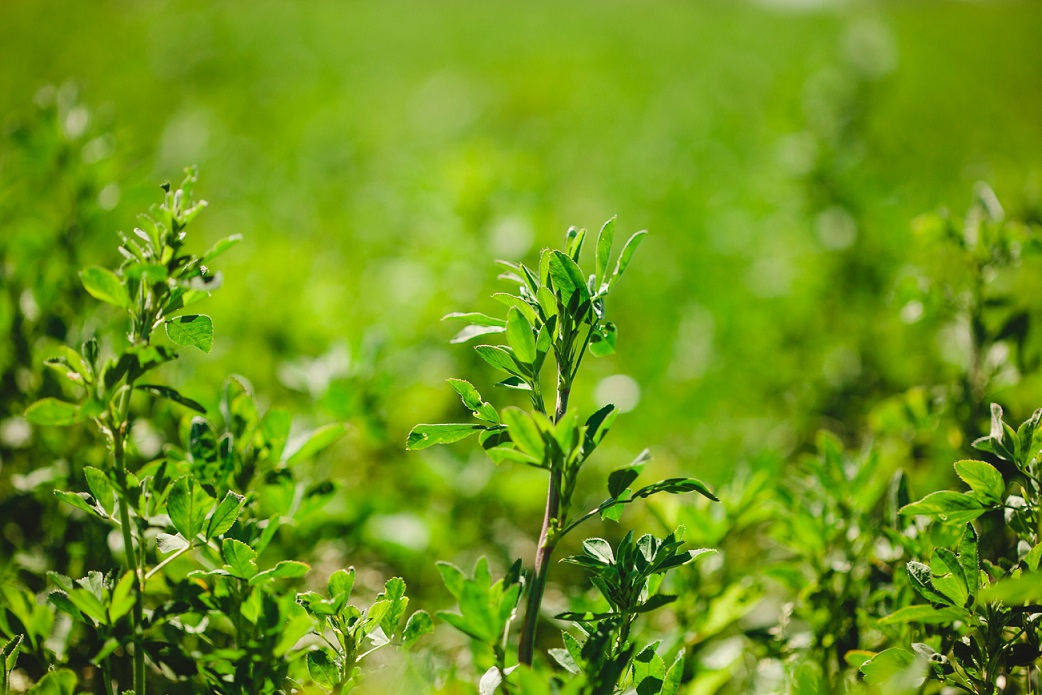 Entrada en vigor de las Nuevas Normas sobre Greening