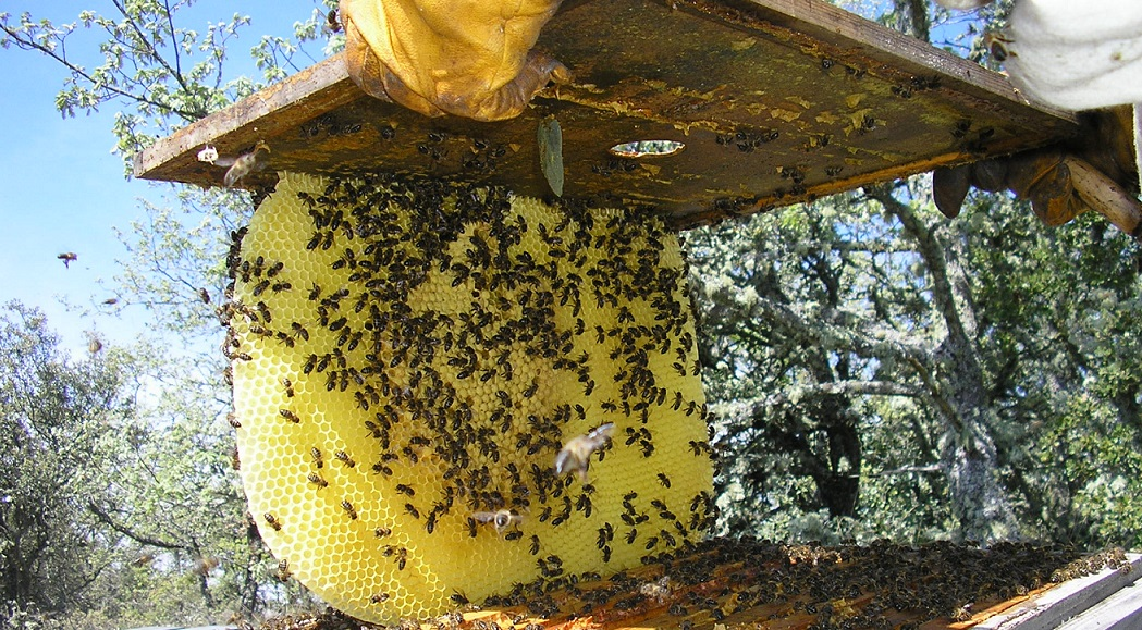 Autorizado el pago de Ayudas Agroambientales para apicultores en Andalucía