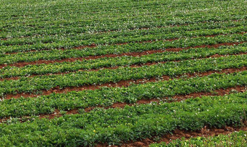 Nuevas Ayudas para Financiar los Costes de Certificación para Producción Ecológica en Andalucía