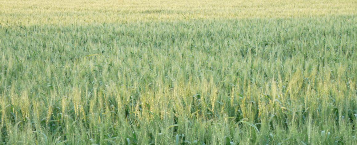 40 millones de euros para 2.682 nuevas incorporaciones en Castilla y León para medidas de Agroambiente y Clima y Agricultura Ecológica