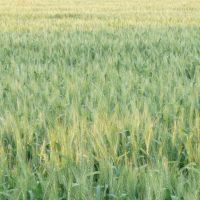 Los Agricultores de Castilla y León reclaman más ayudas para impulsar la producción ecológica