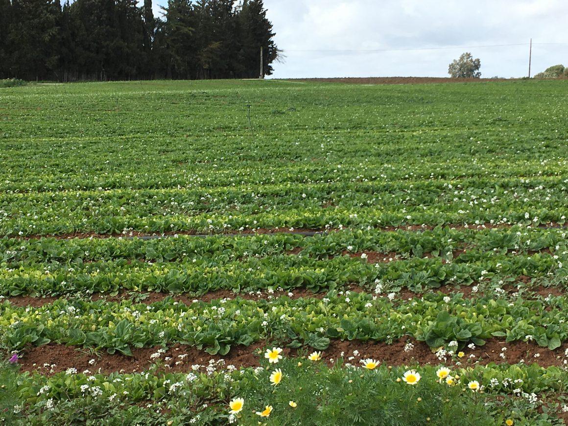Andalucía Abona 33,6 Millones del PDR en Ayudas para la Agricultura y la Ganadería Ecológicas