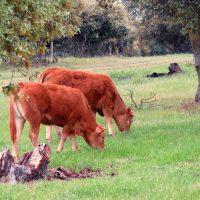 Autorización excepcional para la alimentación convencional del ganado ecológico andaluz como consecuencia de los efectos de la sequía
