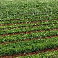 Cambios significativos de la PAC para compensar a los agricultores ecológicos que eligen hacer más por  el clima y el medioambiente