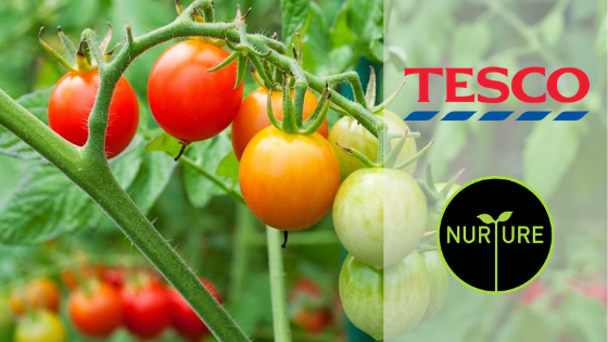 SOHISCERT suma entre sus alcances el servicio de certificación Tesco Nurture