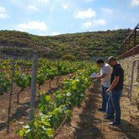 ¿Por qué elegir una DOP o IGP para nuestro vino?