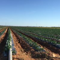 Nuevo Reglamento de Fertilizantes UE