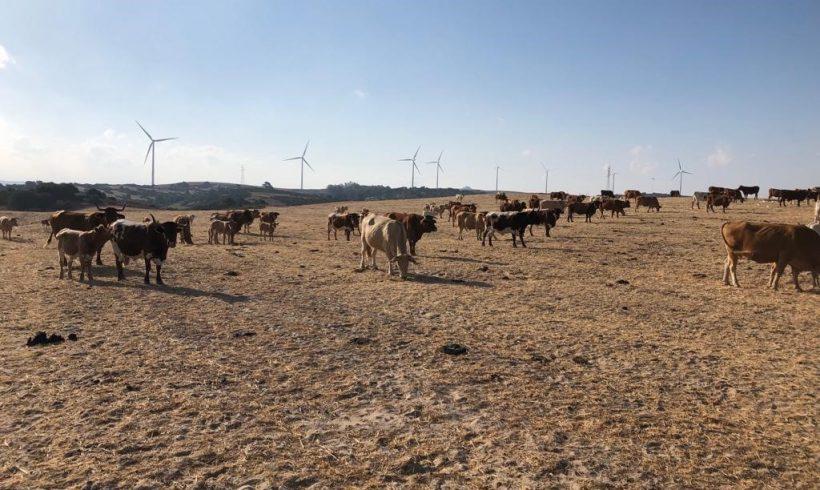 La Junta de Andalucía autoriza el uso de alimento convencional para el ganado ecológico como medida excepcional por la sequía
