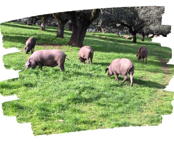 Bienestar Animal. Un valor diferencial para la ganadería
