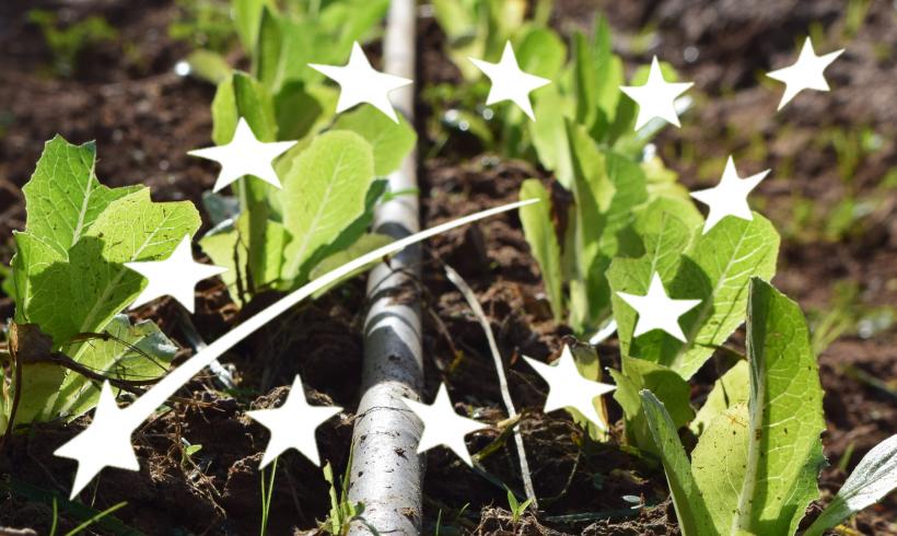 Cambios en la Regulación de Agricultura Ecológica