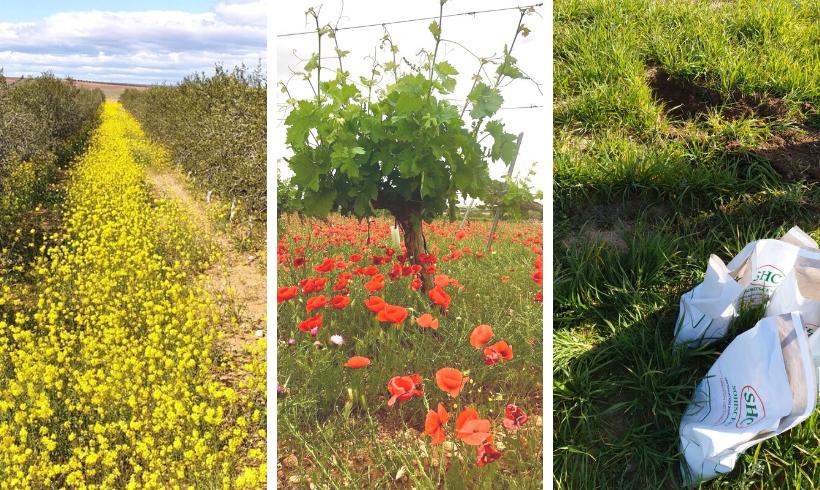 Agricultura Ecológica: recuperar los suelos degradados