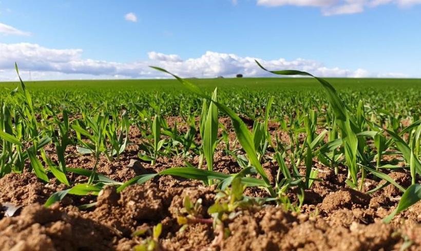 Nuevas claves para la competitividad en el sector agrario