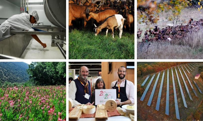 Santa Gadea, queso ecológico de cabra, de granja 100% renovable