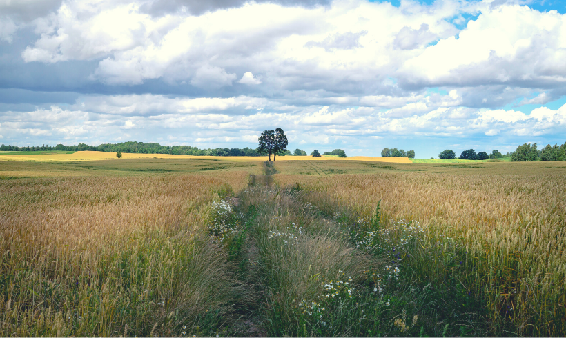 Convocadas las Ayudas a la Incorporación a las Medidas de Agroambiente y de Agricultura Ecológica en Castilla y León