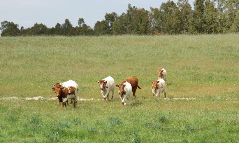 Abierta la Convocatoria para el año 2021 de subvenciones a la Medida 10: Agroambiente y Clima y a la Medida 11: Agricultura Ecológica