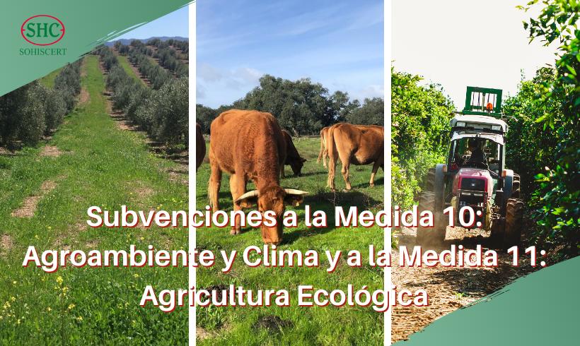 Aprobadas las bases reguladoras para la concesión de subvenciones a la Medida 10: Agroambiente y Clima y a la Medida 11: Agricultura Ecológica