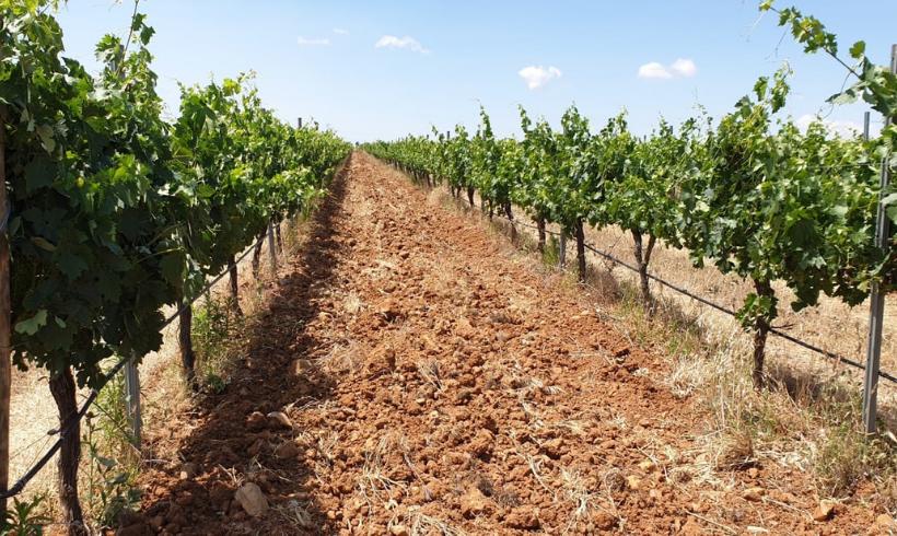 Subvención destinada al apoyo a la nueva participación en regímenes de calidad en Aragón