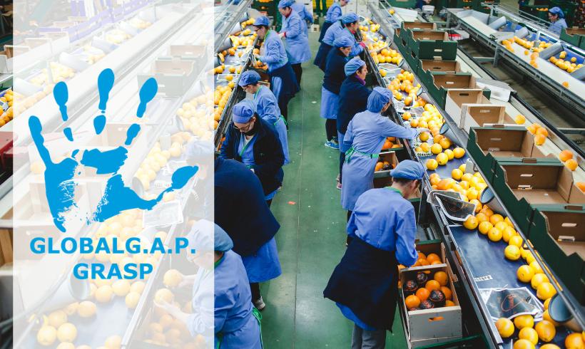 Certificación GRASP para ayudar a los productores a tratar asuntos sociales importantes y garantizar el bienestar de los trabajadores