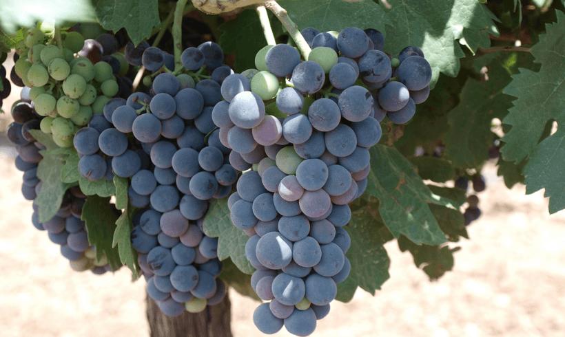 Nuevo impulso al Vino Ecológico con la incorporación de Spanish Organic Wines en la Federación Española del Vino