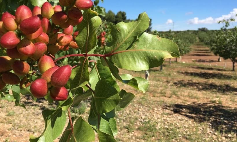 España en disposición de poder cumplir el objetivo fijado en el Pacto Verde europeo, destinando un 25% de las tierras agrícolas a la producción ecológica